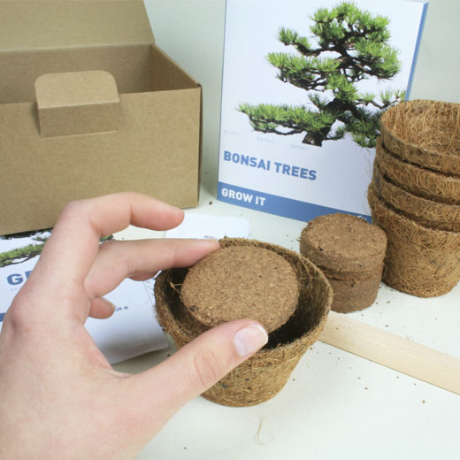 Grow It: Bonsai