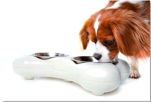 Comedero para Perros en forma de Hueso