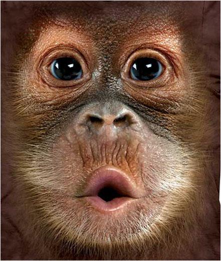 Camiseta Face Orangután Bebé