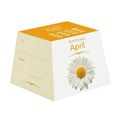 Flores de Aniversário - Abril