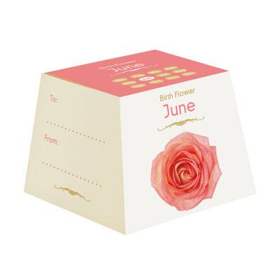 Flores Cumpleaños - Junio