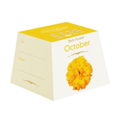 Flores de Aniversário - Outubro
