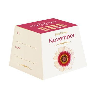 Flores de Aniversário - Novembro