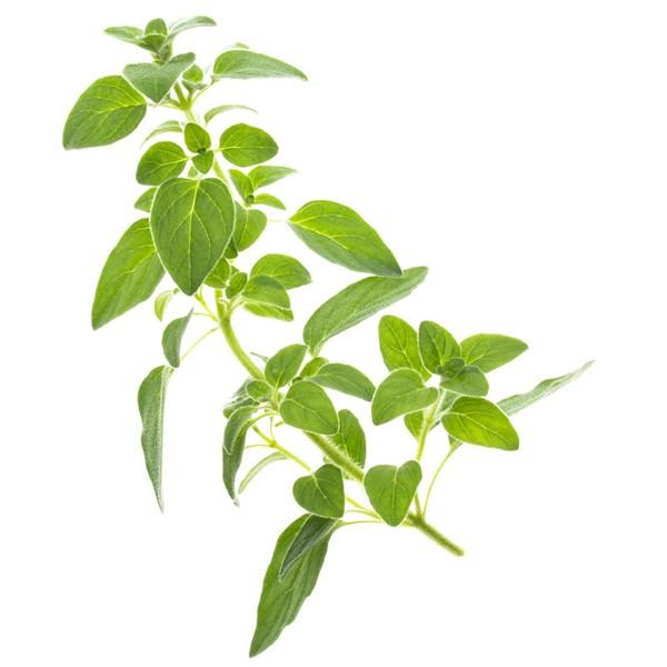 Conjunto de 4 tipos de semillas Tregren