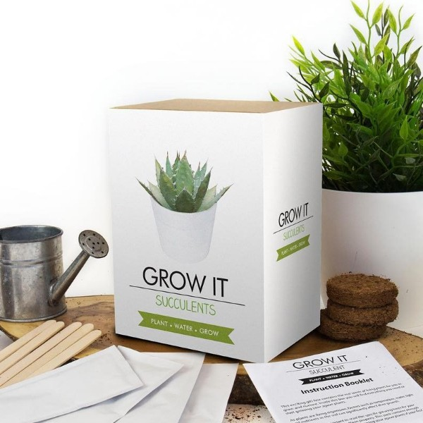 Grow It: Suculentas