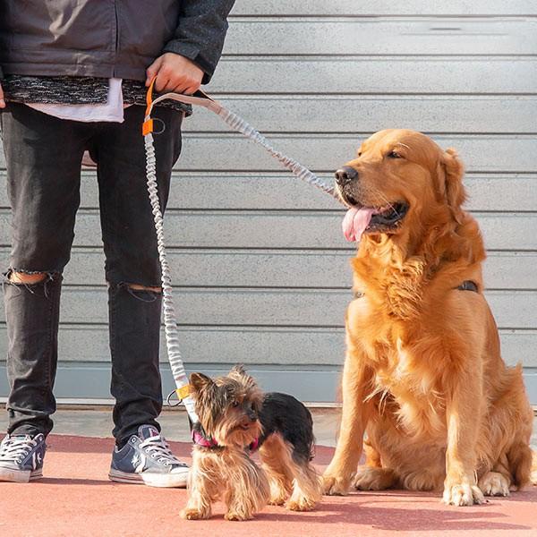 Trela para Cães Mãos Livres